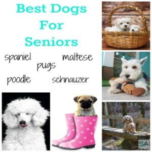 Best Dogs For Seniors