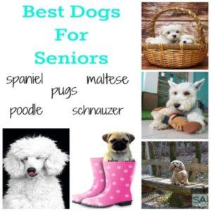 Best Dogs For Seniors