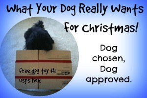 DIY Dog Toys For Christmas – Woof!