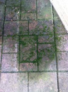 deck moss