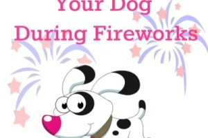 How To Calm Your Anxious Dog During Fireworks