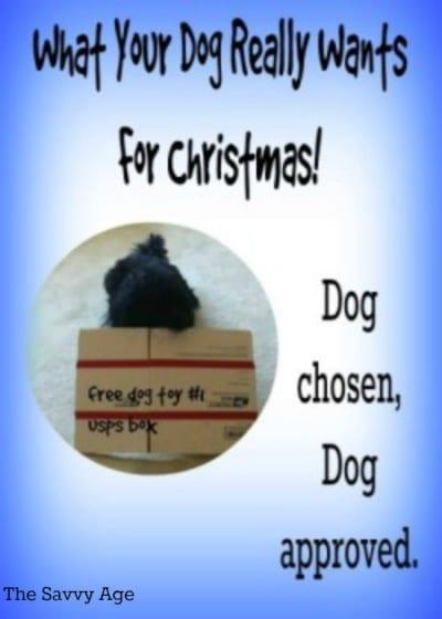 diy-dog-toys-pt