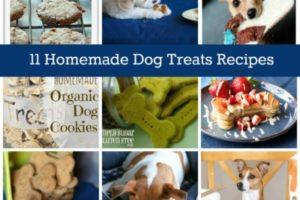 WOOF! 11 Healthy & Homemade Dog Treats Recipes