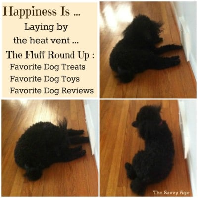 Happiness Is … Favorite Dog Reviews, Favorite Dog Treats, Dog Round Up!