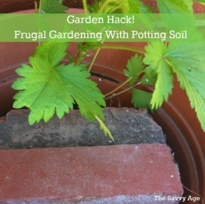 Garden Hack: Frugal Gardening When Using Potting Soil