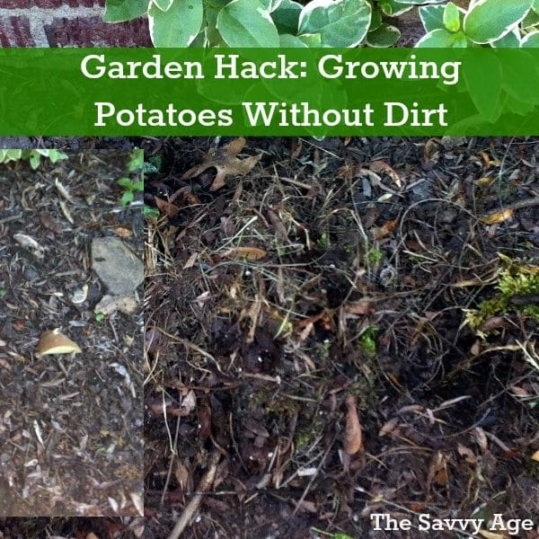 Garden Hack: Growing Potatoes Without Dirt!