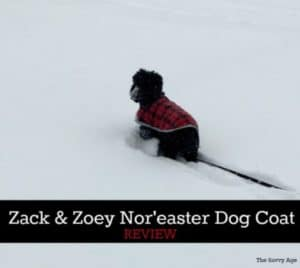 Dog wearing nor'easter dog coat in snowstorm.