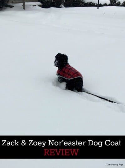 Dog with Nor'easter dog coat in snowstorm.
