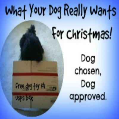Dog chosen, dog approved, what your dog really wants for Christmas!