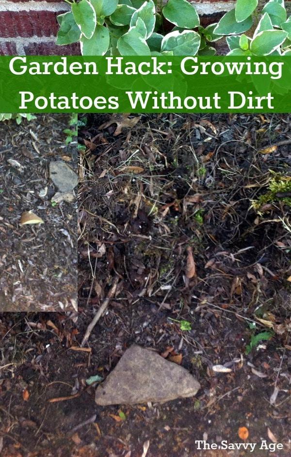 garden hack growing potatoes with mulch