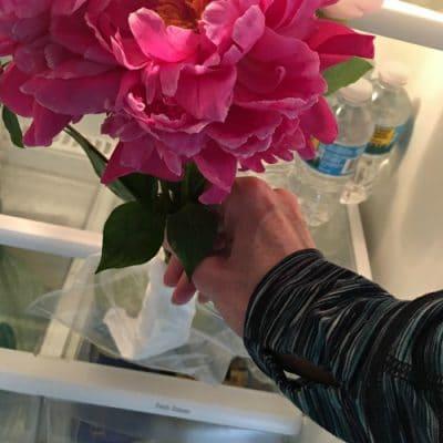 Pink hydrangeas in refrigerator