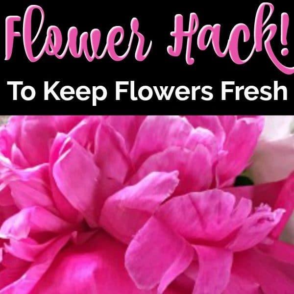 My Favorite Fresh Cut Flower Hack