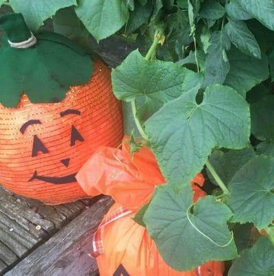 Pumpkin sitting in green shrubs.